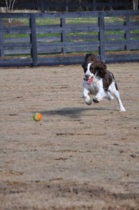 dog playing with a ball at Countryside Pet Estates