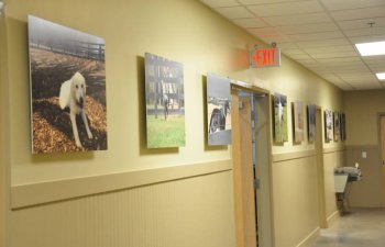 Countryside Pet Estate hallway with pictures of dogs on the wall