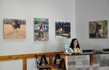 receptionist in the lobby of Countryside Pet Estate